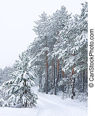 Winter landscape. Forest in snowfall