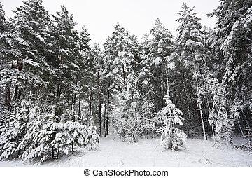 winter landscape, forest