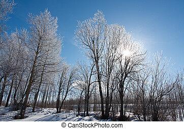 Winter landscape. frozen trees. a bright sunny day