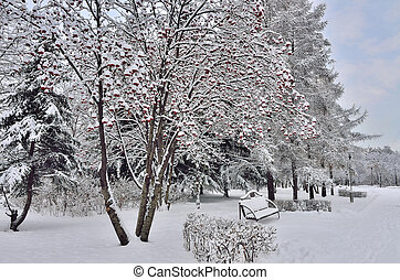 Winter landscape in city park with bench under the rowanberry tree