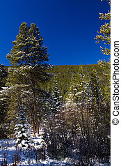 Winter Landscape in Colorado Mountains