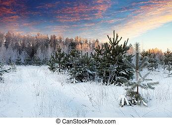 winter landscape in morning