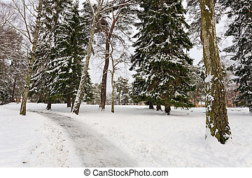 Winter landscape in park