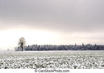 Winter landscape in Slovenia