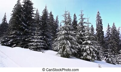 Winter landscape in snow-covered park