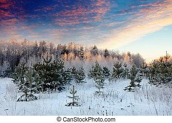 winter landscape in sunrise