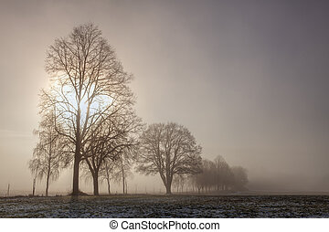 Winter landscape in the dramatic morning mist.