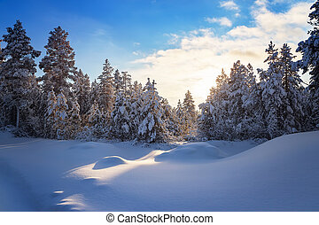 coniferous winter forest with snowdrifts in South Yakutia, Russia