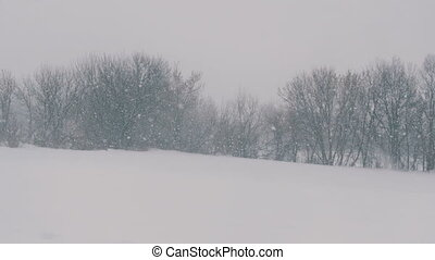 Winter landscape in the forest and the field, falling snow....