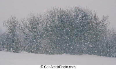 Winter landscape in the forest and the field, falling snow.
