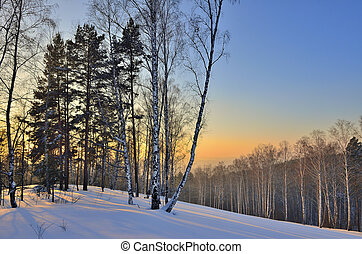 Winter landscape in the forest at sunset.