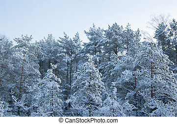 winter landscape in the forest