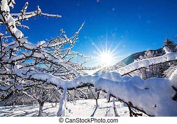 Winter landscape in the morning.