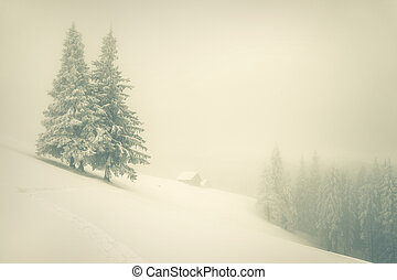 Winter landscape in the mountain forest