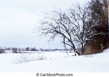 Winter landscape in the Park on the shore of a frozen lake. Background. The photo was taken in soft lens, blur