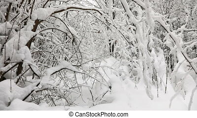 Winter landscape in the snow forest