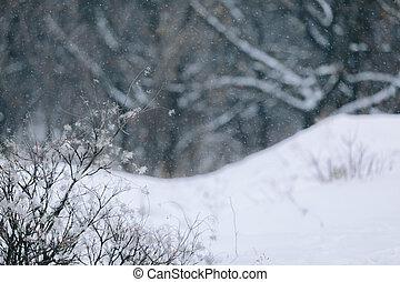 winter landscape. it snows in the woods in winter.