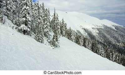 winter landscape mountain forest snow