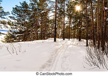 Winter landscape of coniferous forest on a mountain slope in the rays of the bright sun