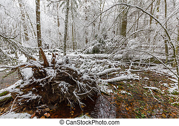 Winter landscape of natural forest with dead oak