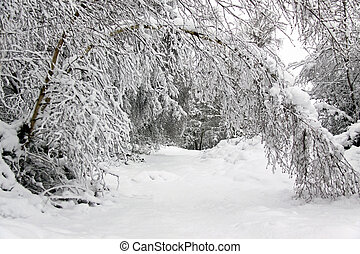 Winter landscape of trees and forest in heavy snow - Winter ...