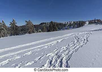 Winter landscape of Vitosha Mountain, Bulgaria
