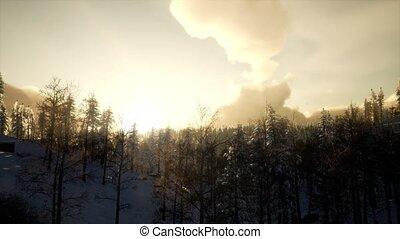 Winter Landscape on a Sunset