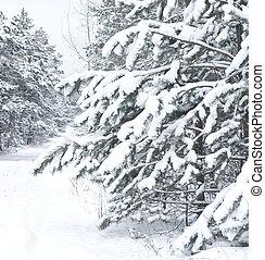 Winter landscape. Pine branch tree under snow