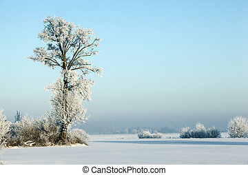 Winter landscape series: Frost covering ground