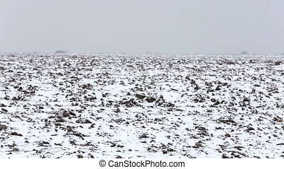 Winter landscape: Snow covered plowed Field. Trail crossing...