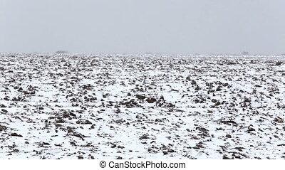 Winter landscape: Snow covered plowed Field. Trail crossing...