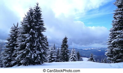 Winter landscape snow forest trees