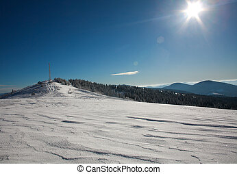 Winter landscape snow mountain pine forest in sunshine