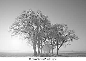 winter landscape - a winter landscape on a december morning