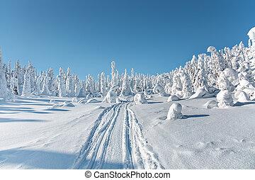 Winter landscape. The snow-clad trees on Mount Nuorunen. The Republic of Karelia. Russia