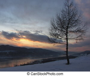 Winter landscape. - The Solitary tree on background of the...