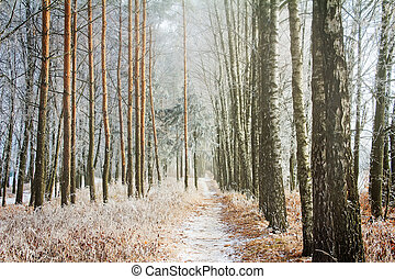 Winter landscape: trees in the frost. - Winter landscape:...