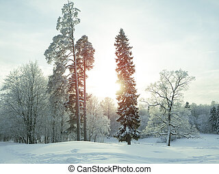 Winter landscape. Trees in the snow at sunset.