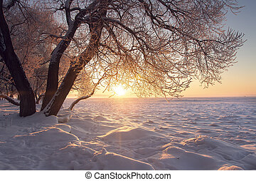 Winter landscape. Warm sunlight at winter at sunset. Frost and fog. Tree on textured snow in sun. Christmas background. Amazing winter nature. Hoarfrost on branches. Vivid Sun sets on horizon.