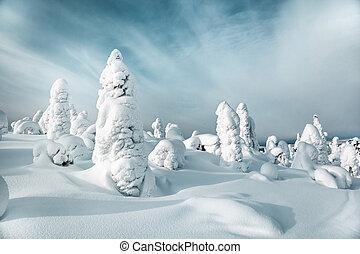 Winter landscape. White silence on Mount Kivakka. Karelia. Russia
