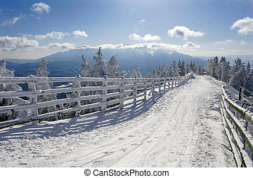 Winter Landscape - Winter landscape with pine trees covered ...