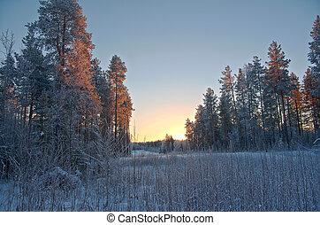 Winter landscape. Winter scene