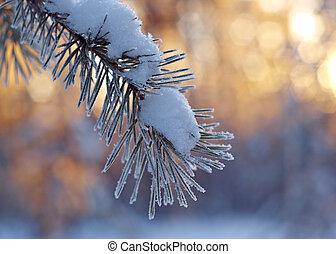 winter landscape .Winter scene