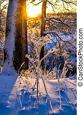 Winter landscape with a beautiful sunset in the forest