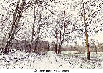 Winter landscape with a road covered with snow
