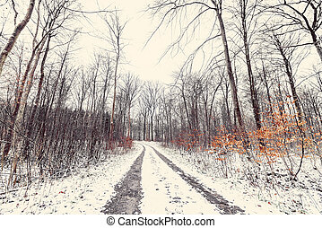 Winter landscape with a road going through a forest