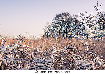 Winter landscape with a tree