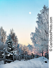 Winter landscape with birch tree