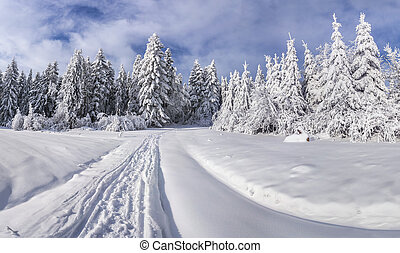 Winter landscape with fir-trees and fresh snow. Ukraine,...