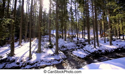 Winter landscape with firs and stream on a sunny day